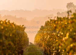 Vignobles/Vineyards